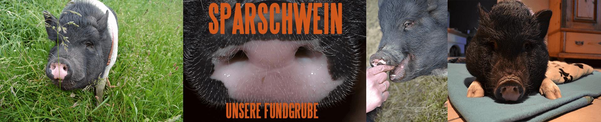 AnSoJo Outdoor Sparschwein unsere Fundgrube